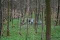 2010-04-03_12-20-24_OFA_2010