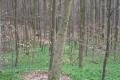2010-04-03_14-07-21_OFA_2010